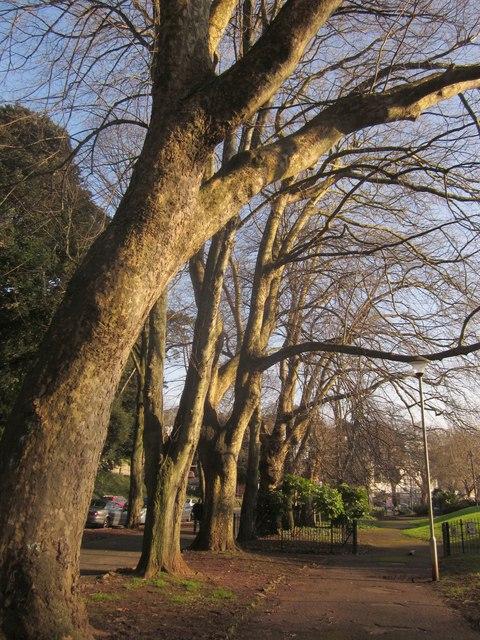 Trees beside Upton Park