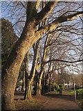 SX9164 : Trees beside Upton Park by Derek Harper