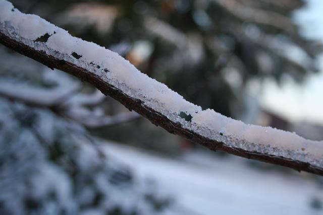 Ice glazed branch in Bridgford Park