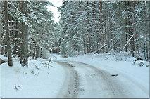 NH9718 : Snow covered road near Loch Garten by Steven Brown