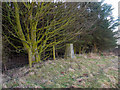 NT9707 : Copse with trig point by Trevor Littlewood