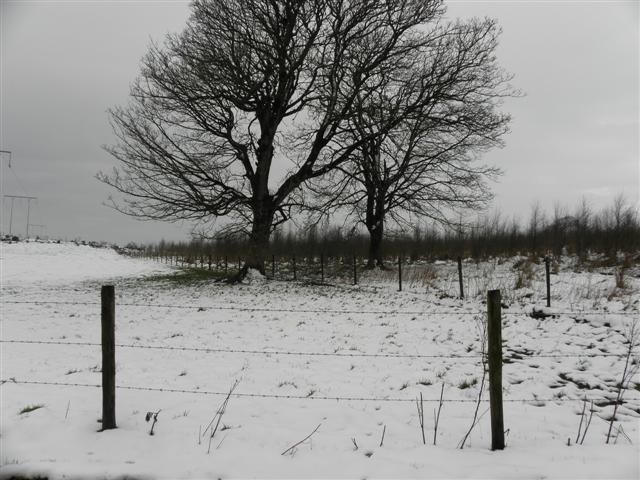 Snow, Mullaslin