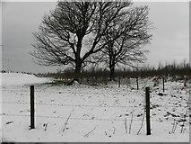 H5672 : Snow, Mullaslin by Kenneth  Allen