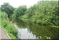 TG1906 : River Yare by N Chadwick