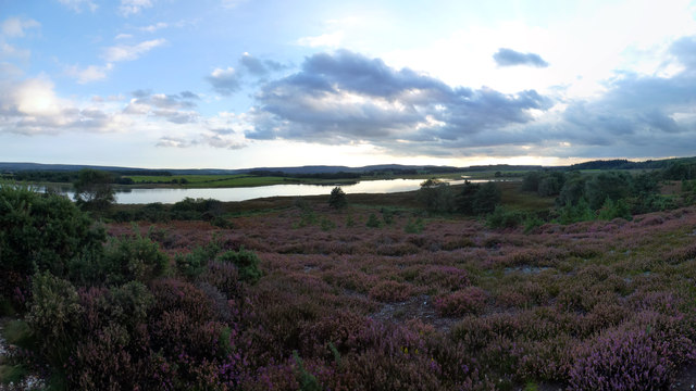 Coombe Heath and Middlebere Lake