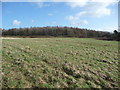 ST4692 : Inside Llanmelin hillfort by Jeremy Bolwell