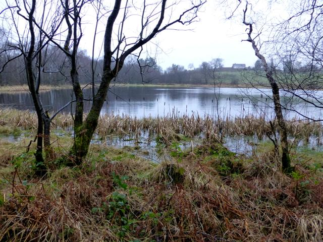 Small trees and bulrushes at Fireagh Lough