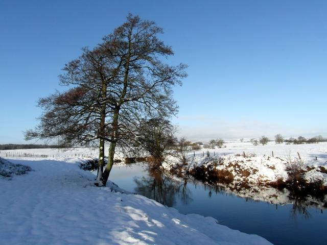 Tree beside the Kinnel Water