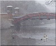 SK5803 : Upperton Road Bridge in the snow by Mat Fascione