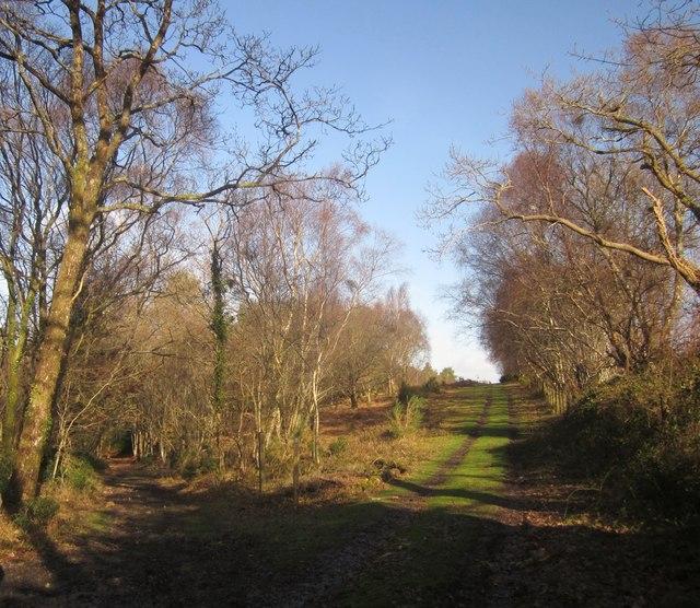Track junction, Yarner Wood