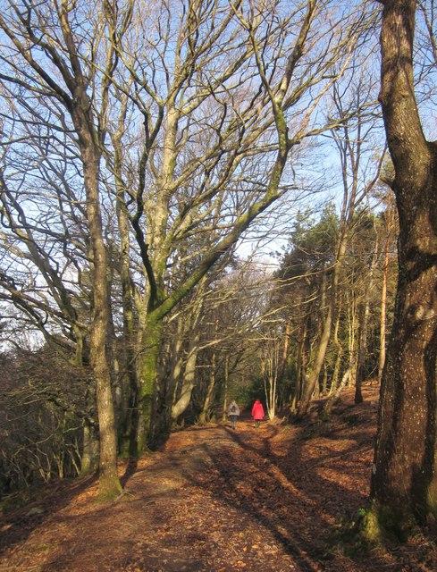 Templer Way in Yarner Wood
