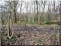 SE2706 : Footpath crossing bridleway, Bentcliff Hill Plantation by Christine Johnstone