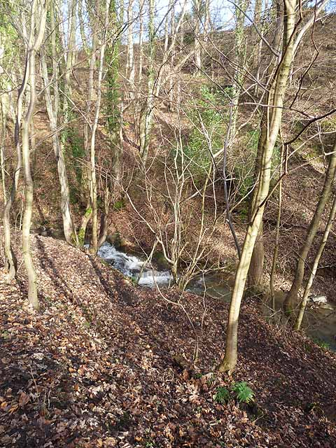 The New Burn in Walbottle Dene