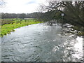 SY8392 : River Piddle In Spate by Nigel Mykura