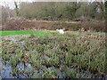 SY8392 : Swans at Ceciley Bridge by Nigel Mykura