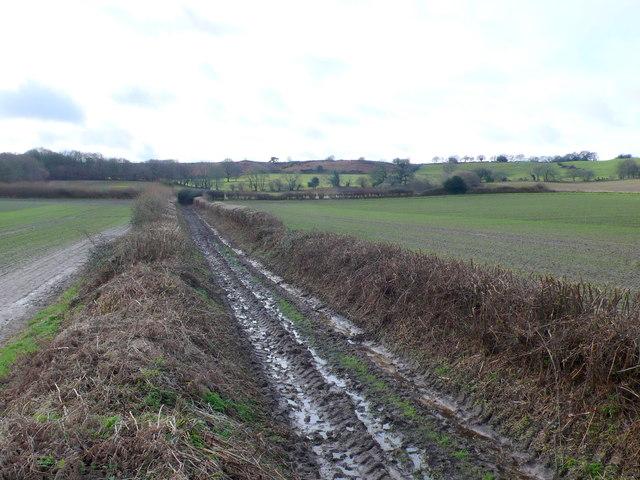 Bridle Path at Shitterton