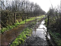 H5172 : Gate and flooded lane, Cloghfin by Kenneth  Allen