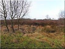 H5172 : Bogland, Cloghfin by Kenneth  Allen