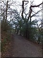 SW8440 : Path in Trelissick North Wood by David Smith