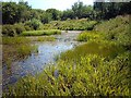 NY3154 : Pond in Pond Wood, Watchtree Nature Reserve by Rose and Trev Clough