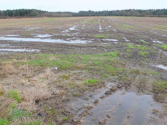 Fields at Lower Woodbury