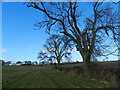 SK2639 : Two trees, fields and bridleway by Peter Barr