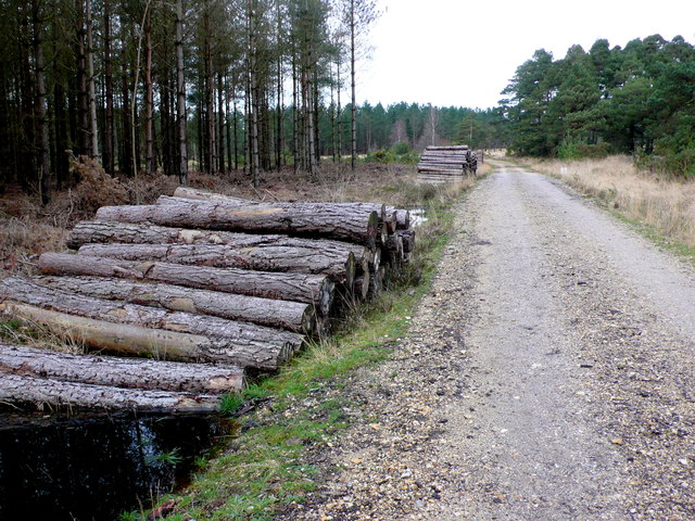 Forestry Track on Philliols Heath