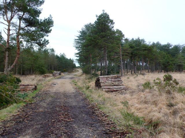 Forestry Track Philliols Heath