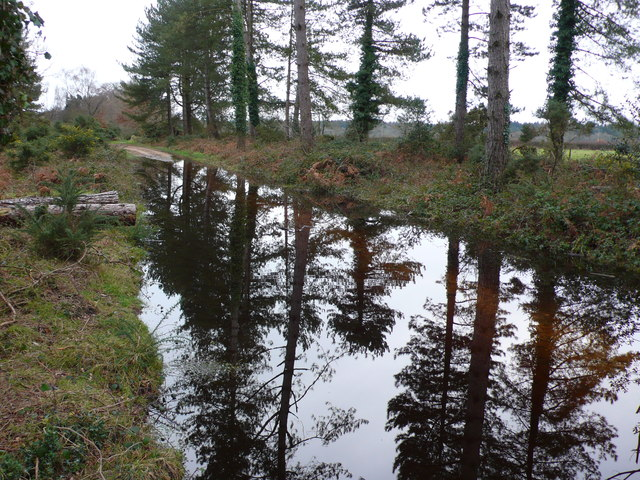 Flooded Forestry Track