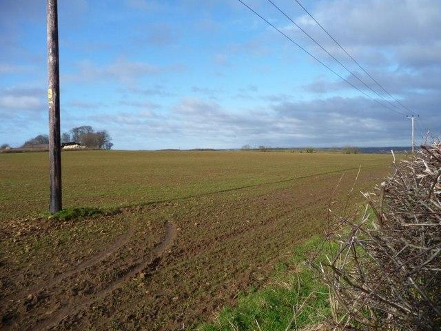 Emerging crop at High Moor