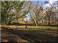 SX7685 : Open woodland above Steward Wood by Derek Harper