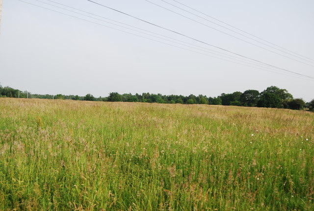 Grassy meadow by the River Yare