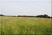 TG1807 : Grassy meadow by the River Yare by N Chadwick