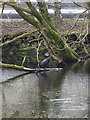SD3077 : Cormorant in the Ulverston Canal by Karl and Ali