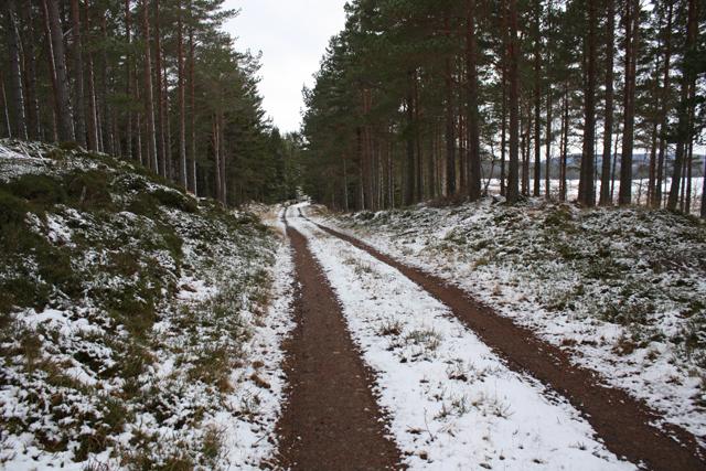 Track in Deishar Wood