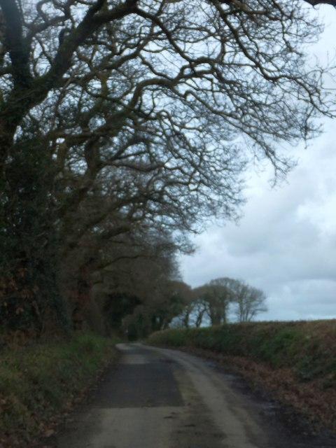 The edge of Trehane Wood