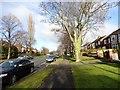 NZ2752 : Park Road North by Robert Graham