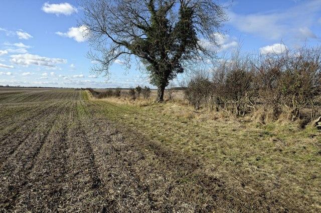 Hedgerow, west of Bedford Purlieus NNR