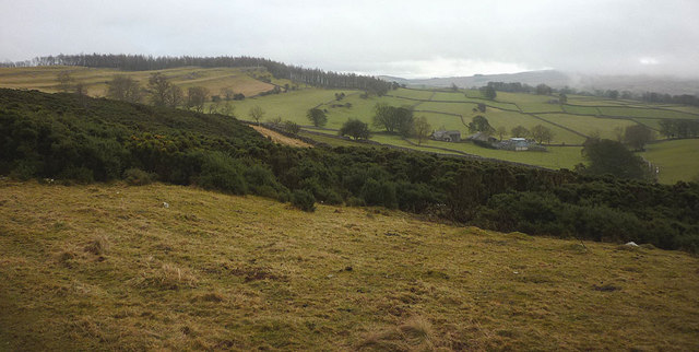 Grassland and gorse, Knipeside Common