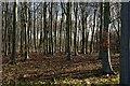 TF0400 : Bedford Purlieus NNR by Julian Dowse