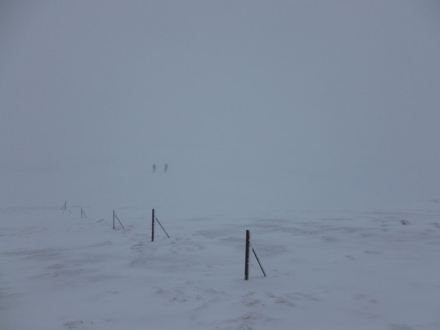 Walkers and fenceposts in the snow