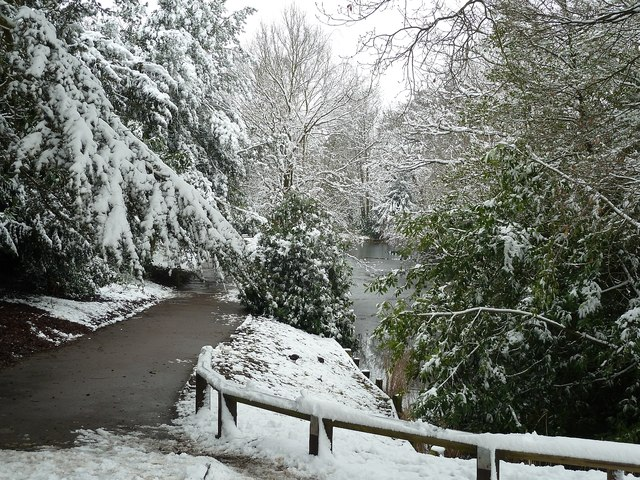 Pool and trees in Parkfield