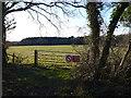 SY8885 : Field at West Holme Manor by Nigel Mykura
