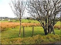 H5575 : Trees, Altdrumman by Kenneth  Allen