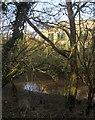 SX8770 : Aller Brook by Derek Harper