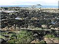 NT5385 : Cowton Rocks at North Berwick by M J Richardson