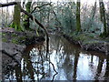 SY8785 : Luckford Lake by Nigel Mykura