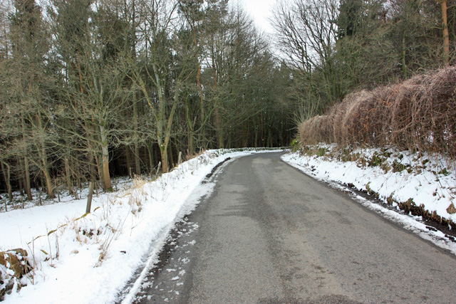 The road to Abney enters the woods