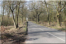 SK6054 : Haywood Oaks Lane by J.Hannan-Briggs