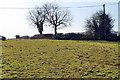 SK7259 : Public Footpath across field by J.Hannan-Briggs